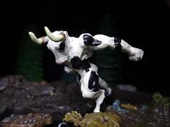 Holstein Minotaur
