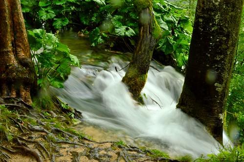 life wood tree verde green water alberi forest river spring nikon veil fiume acqua croazia velo enrico foresta nikond3200 montanari sorgente plitvic enricoico