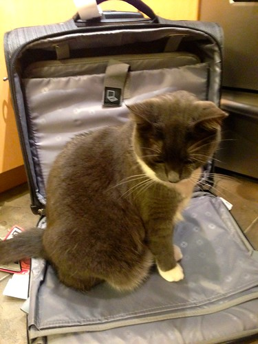 Crick checking out my new wheeled bag for work