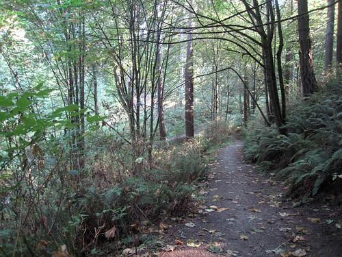 Llandover Woods Greenspace