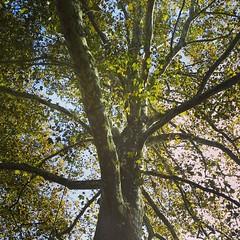 Tree near tbe Brandywine River