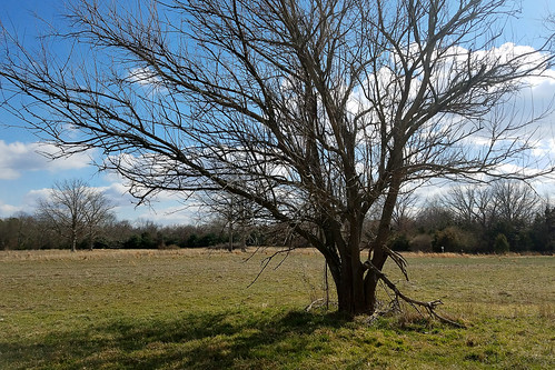 sky cloud tree branch branches lawn ground clouds crisp