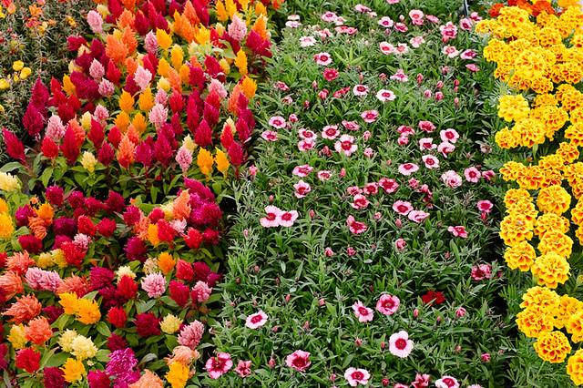 FlowerDay-3
