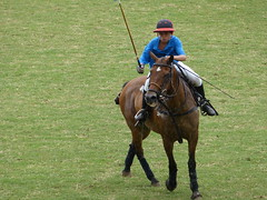 stick and ball games, animal sports, equestrianism, mare, equestrian sport, rein, sports, stick and ball sports, polo, horse, jockey,