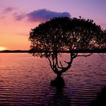 Kenfig Pool Sunset