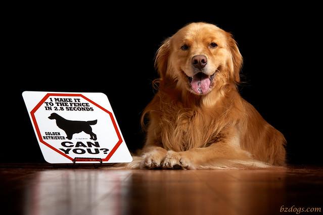 Guard Dog Henry