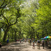 Central Park, NYC by Deirdre Hayes