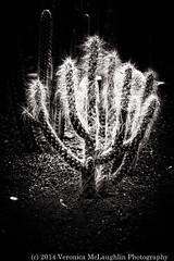 Wintergarden-fb-17