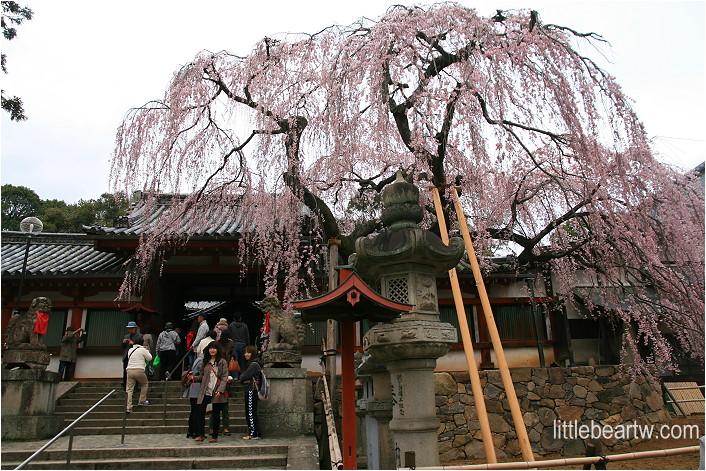 奈良公園-16