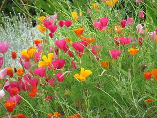 Davie Village Community Garden