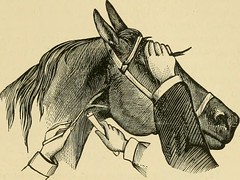 """Image from page 658 of """"The standard horse book, comprising the taming, controlling and education of unbroken and vicious horses"""" (1895)"""