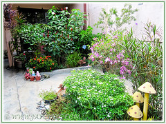 Bedding companion plants, incl. Bamboo Orchid in the foreground of the inner border, Jun 22 2014