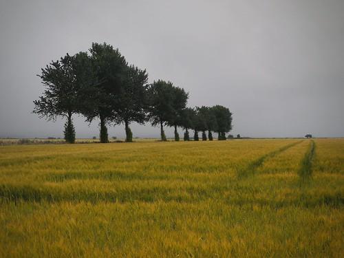trees dawn scotland grangemouth skinflats
