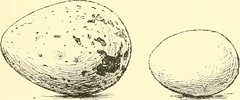 """Image from page 90 of """"Bird-life; a guide to the study of our common birds"""" (1897)"""
