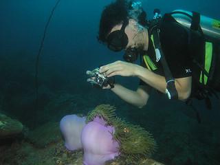 "<img src=""digital-underwater-photographer-tioman-island-malaysia.jpg"" alt=""Digital Underwater Photographer, Tioman Island, Malaysia."" />"