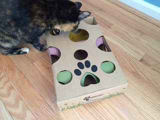 Lulu plays with an interactive treat dispensing toy!