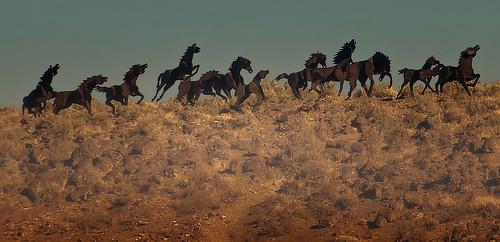 sculpture horse washington artwork wildhorsemonument davidgovedare grandfathercutsloosetheponies pentaxk5