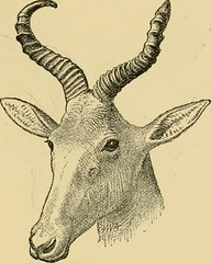 "Image from page 72 of ""Horn measurements and weights of the great game of the world: being a record for the use of sportsmen and naturalists"" (1892)"