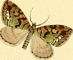 """Image from page 150 of """"Sammlung europscher Schmetterlinge, errichtet von Jacob Hner in Augsburg"""" (1793)"""