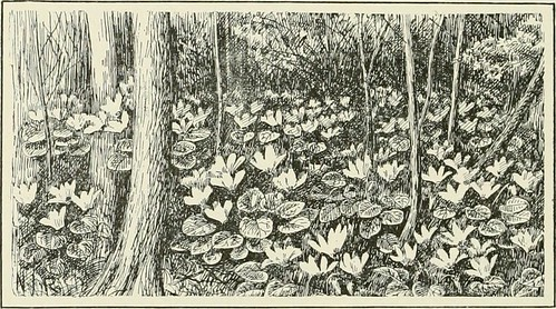 Image from page 357 of