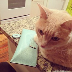 I got this new clutch and am ready to hit the town #catsofinsta #catselfie