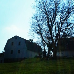Car shot for barn, then noticed tbe dead tree.  Outside of Kennett Square, PA.