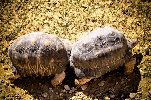 Tortoises at Paris Zoo