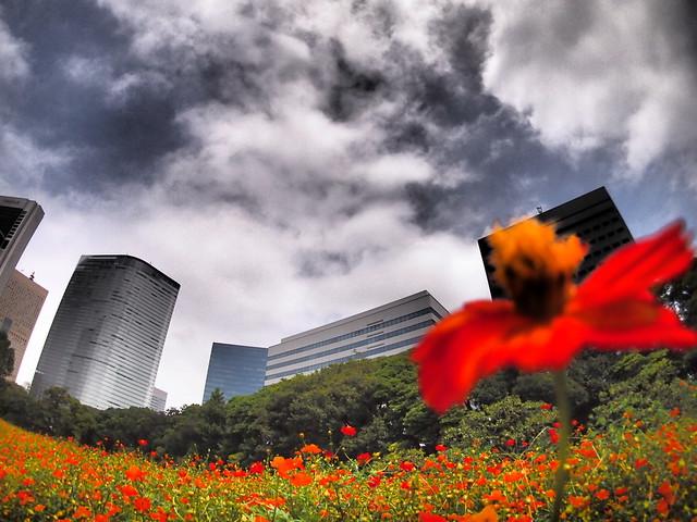 TOKYO Flower Scene