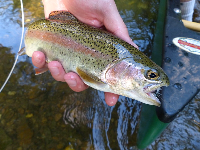 Gunpowder River Rainbow