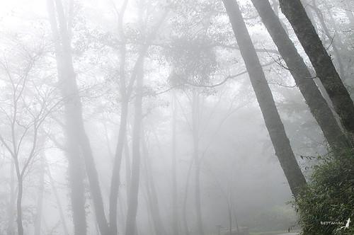 台灣的霧林中隱藏著許多珍貴的水資源,台大學者林博雄透過捕霧技術,領略了台灣其實不缺水。圖為新竹觀霧赤楊霧林,來源:Shipher (士緯) Wu (吳)