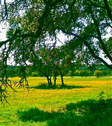 landscapes texas wildflowers hillcountry