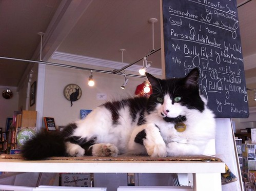 American book store cat