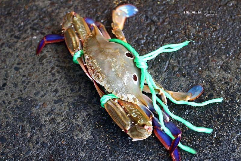 西北萬里蟹 (69)