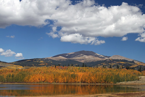 aspen aspens gold golden fall autumn color colors colorado bobrussell russell rmrussell