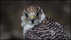 You looking at me.............?