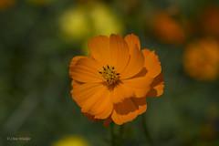 オレンジ② Orange