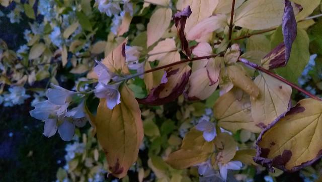 Plant discolouration