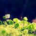 Flora del Sueve
