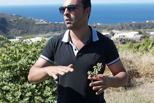 oregano in sicily