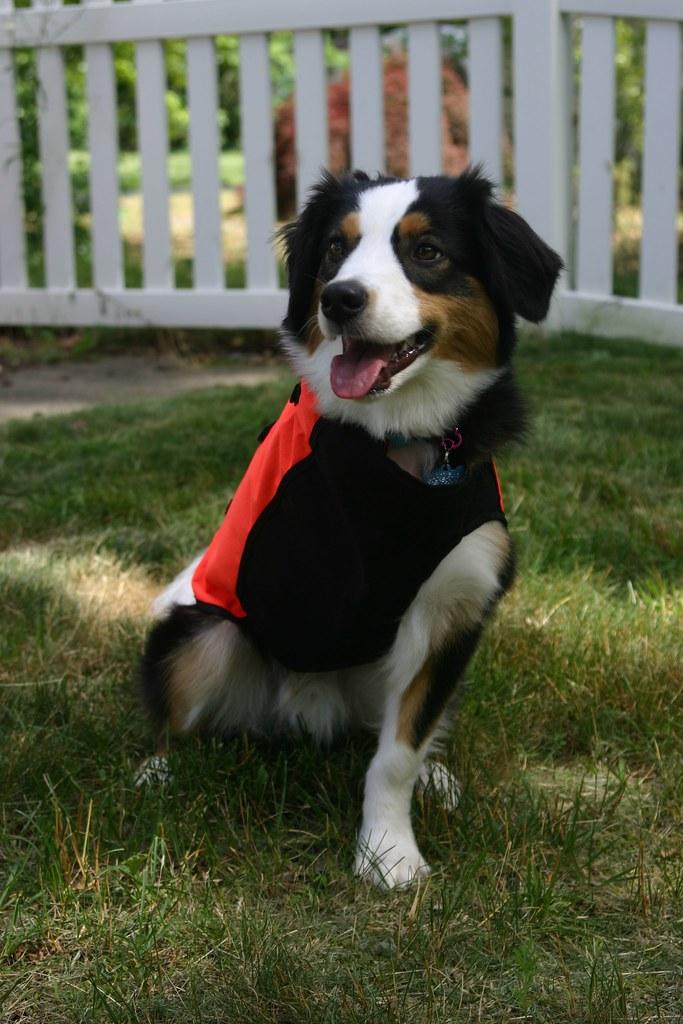 Sylmar body guard vest