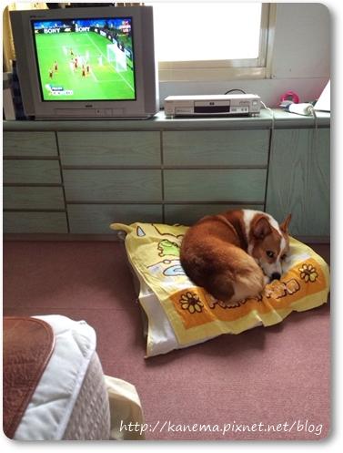 足球孤兒3