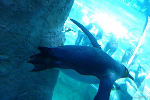 【73日目】日本最北の旭山動物園(北海道)