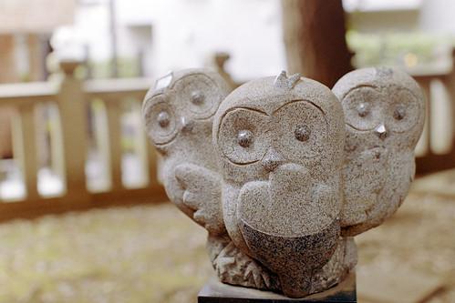 フクロウ3匹/three owls