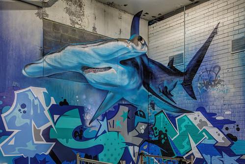 Dvate Shark Fitzroy 2014-06-15 (IMG_4805-7)