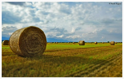 landscape piemonte ©nicolaroggero