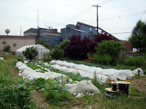 Braddock Community Farm, Braddock - June 4th 2014