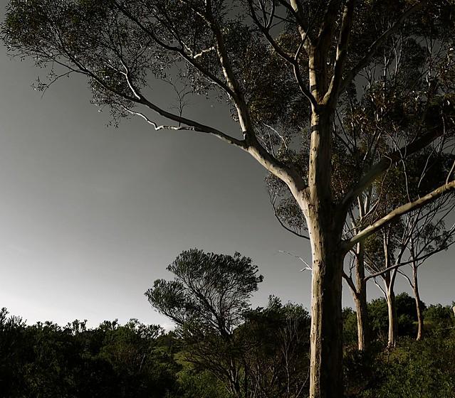 Gumtrees Bulla Winter July 2014