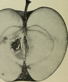 A Bruised Apple stories