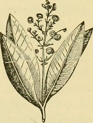 "Image from page 374 of ""Smiley's cook book and universal household guide; a comprehensive collection of recipes and useful information, pertaining to every department of housekeeping .."" (1895)"