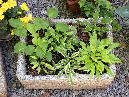 Trough garden